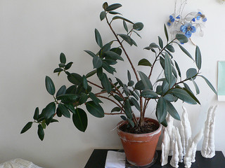 RubberPlant Healthy Home: 10 Tips to Freshening The Air in Your Home